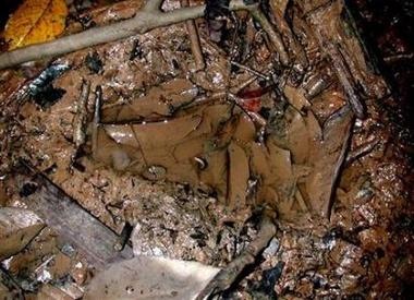 Malaysia Bigfoot footprint